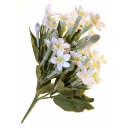 Stephanotis Bush - White & Green