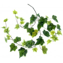 Ivy Spray - Variegated (65cm Long)