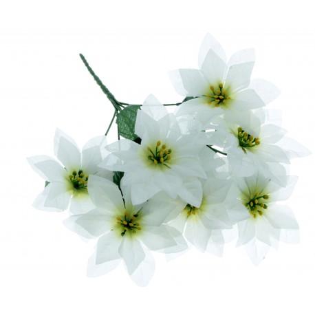 Poinsettia Bush - White (7 Heads)