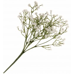 Gypsophila Spray - White & Green (30cm long, 5 stems per pk)