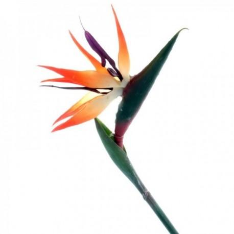 Bird of Paradise - Natural (85cm long)