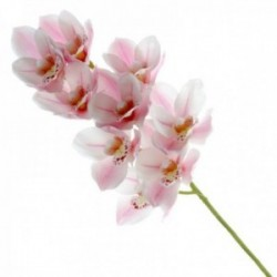 Real Touch Cymbidium Orchid - Pale Pink (70cm long, 9 heads)