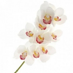 Real Touch Cymbidium Orchid - Cream (70cm long, 9 heads)