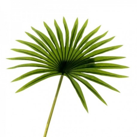 Real Touch Fan Palm Leaf - Green (50cm Long)