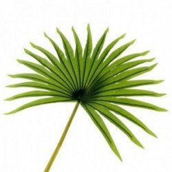 Real Touch Fan Palm Leaf - Green (82cm Long)