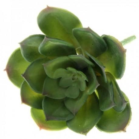 Echeveria Succulent - Green (10cm diameter, 11cm Long)