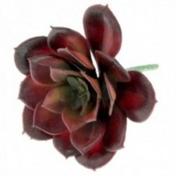 Echeveria Succulent - Red (10cm diameter, 11cm Long)