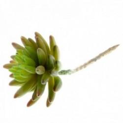 Live Forever Succulent - Green (11cm diameter, 14cm Long)