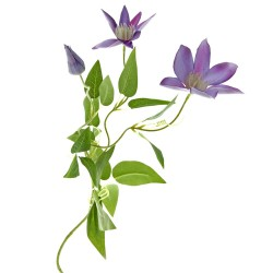 Clematis - Lavender (3 heads, 70cm long)