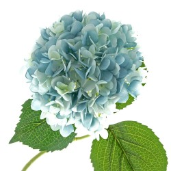 Single Hydrangea - Light Blue (19cm diameter, 82cm long)
