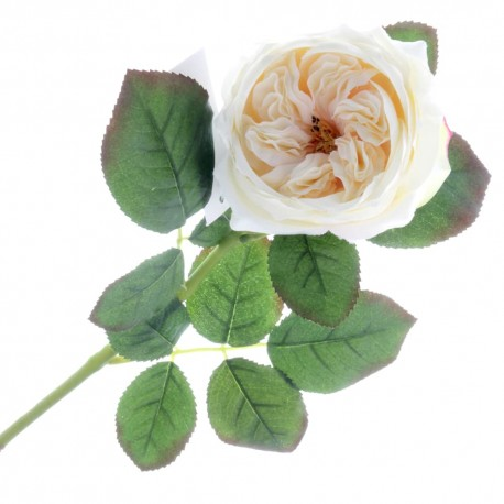 Garden Rose - Cream (60cm long)