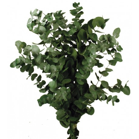 Preserved Spiral Eucalyptus - Green