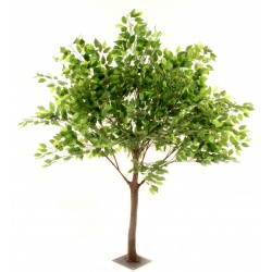 Ficus Tree - Green (1.8m tall)