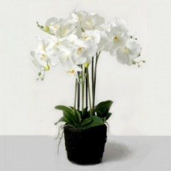 Real Touch Artificial Orchids In Moss Pot - White (60cm tall, 6 stems)