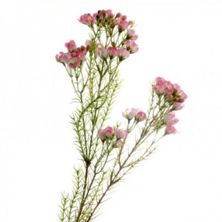 Wax Flower Spray - Pink (77cm long)