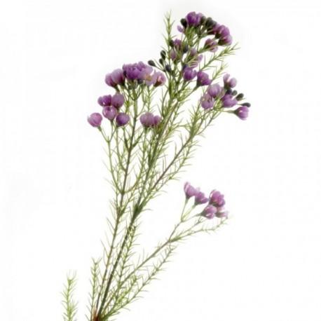 Wax Flower Spray - Purple (77cm long)