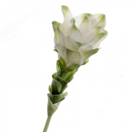 Curcuma - White/Green (63cm long)