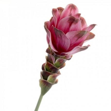 Curcuma - Pink (63cm long)