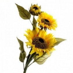 Sunflower - Yellow & Green (88cm long, 3 heads)