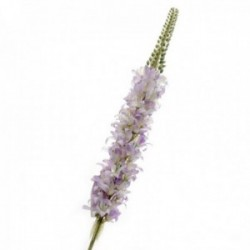 Lupin - Purple (106cm long)