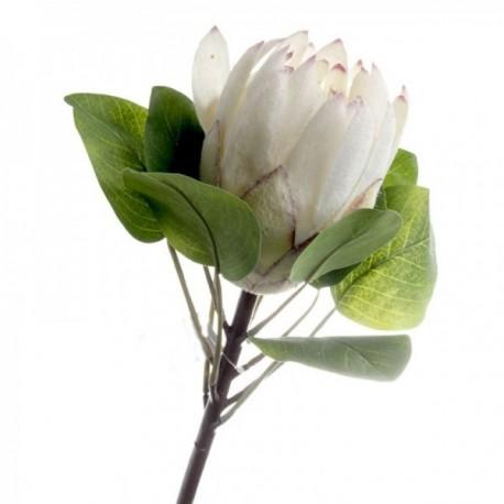 Protea - Cream (65cm long)