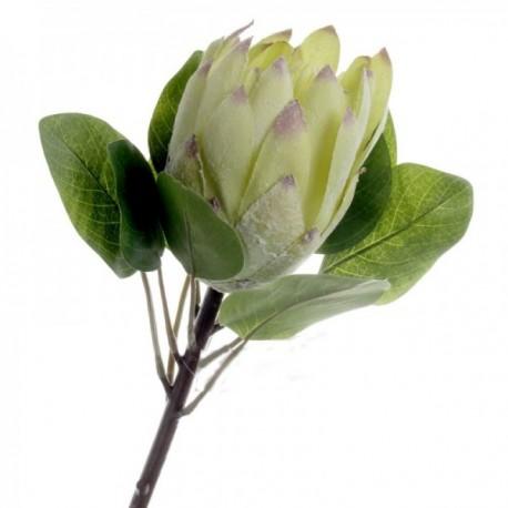 Protea - Green (65cm long)
