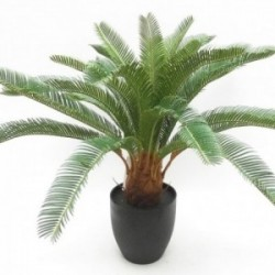 Potted Cycas - Natural (72cm long)