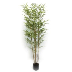 Potted Bamboo Tree - Natural (180cm tall)