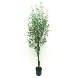 Potted Olive Tree - Natural (180cm tall)
