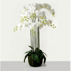 Real Touch Artificial Orchids In Moss Pot - White (110cm tall, 9 stems)
