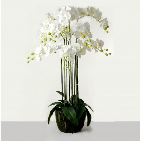Real Touch Orchids In Moss Pot - White (110cm tall, 9 stems)