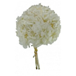 Preserved Hydrangeas - White (approx. 4 stems per pk)