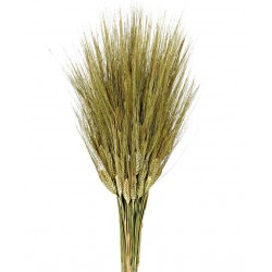 Preserved Triticum - Natural (80cm long, 200g per pk)
