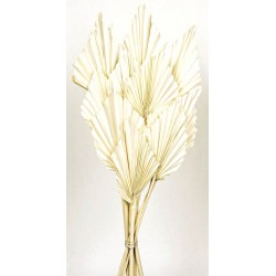 Palm Spear - Bleached White (10pcs per pk)