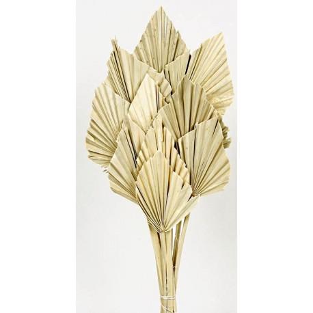 Palm Spear - Natural (10pcs per pk)