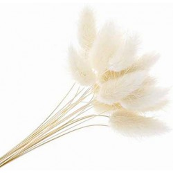 Lagurus - White (80g)
