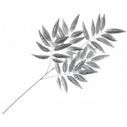 Metallic Ficus Spray - Silver (55cm Long)