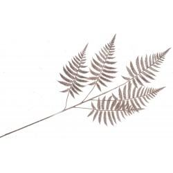 Metallic Fern Spray - Rose Gold (50cm Long)