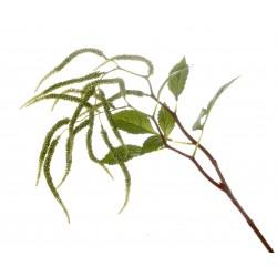 Amaranthus Spray - Green (95cm long, 14 heads)