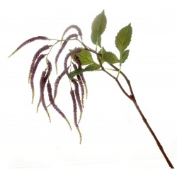 Amaranthus Spray - Purple (95cm long, 14 heads)