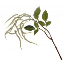 Amaranthus Spray - White (95cm long, 14 heads)