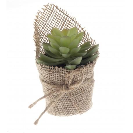 Potted Echeveria Succulent - Green (14cm long)