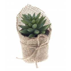 Potted Stonecrop Succulent - Green (14cm long)