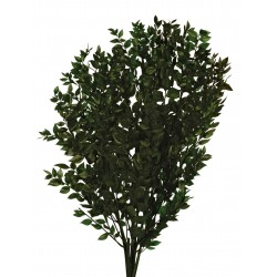 Preserved Ruscus - Green (70-80cm long, 150g)