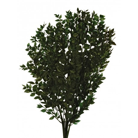 Preserved Ruscus - Natural Green (150g)