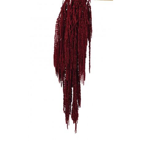Preserved Amaranthus Caudatus - Burgundy (150g)