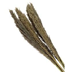 Cana Silvestre - Natural (approx. 90cm long, approx. 6pcs per pk)