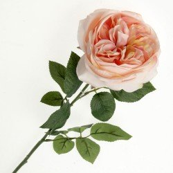 Garden Rose - Peach (50cm long)
