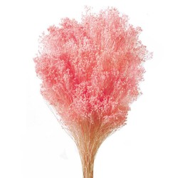 Preserved Broom Blooms - Light Pink (50cm tall, 100g)