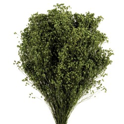 Preserved Broom Blooms - Dark Green (50cm tall, 100g)